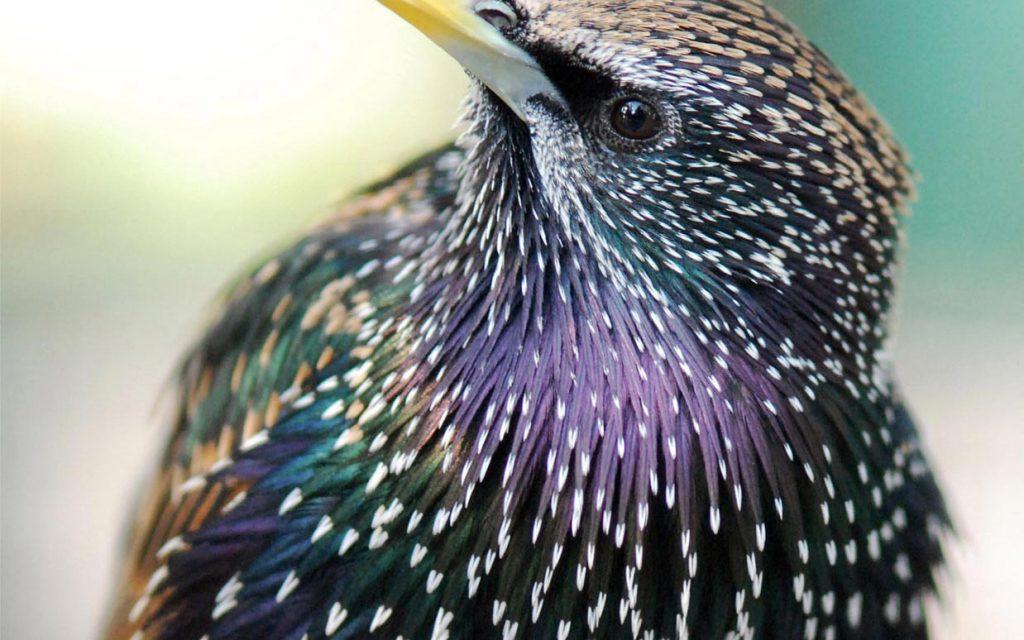 Lutte contre les oiseaux nuisibles bordeaux gironde 33 d raking - Se debarrasser des pigeons ...